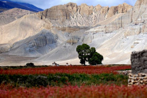 Mustang Overland Tour